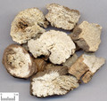NanShashen (Coastal Glehnia Root)---南沙参
