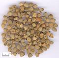 Fupenzi (Fructs Rubi)---覆盆子