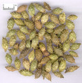 Cangerzi ( Siberian Cocklebur Fruit/  fructus xanthii)---苍耳子(powder100g/bottle)