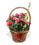 Basket of Azalea