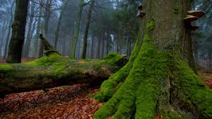 Image result for Tree Moss