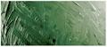 Grumbacher Academy Oil Sap Green