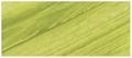 Grumbacher Academy Acrylic Thalo Yellow Green 90ml