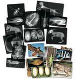 Animal X-Ray Kit