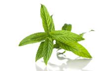 Dekang Spearmint E-Liquid | E-Juice