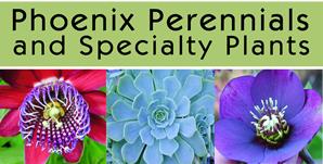 Phoenix Perennials Garden Centre