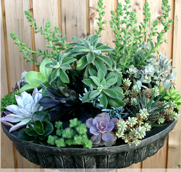 Western Independent Greenhouse - Succulent planter
