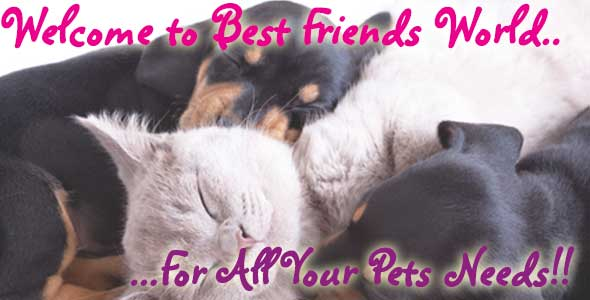 Welcoime to Best Friends World For all your pets needs