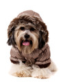 Urban Pup Luxury Quilted Parka with Detachable Hood