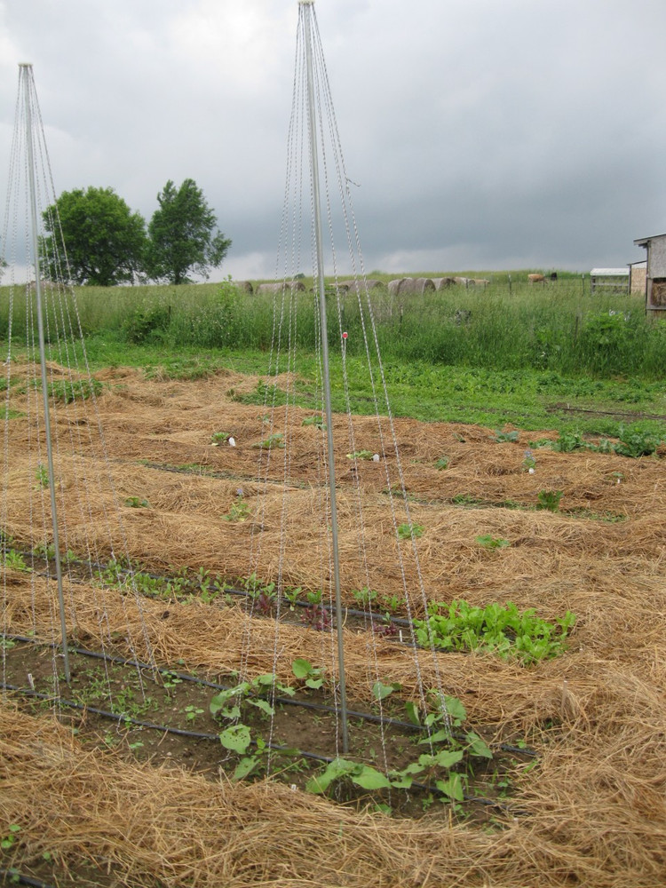 Place your topper on a pole, run strings to the ground, secure the strings with the included j-hooks, and you have an instant trellis perfect for climbing beans.