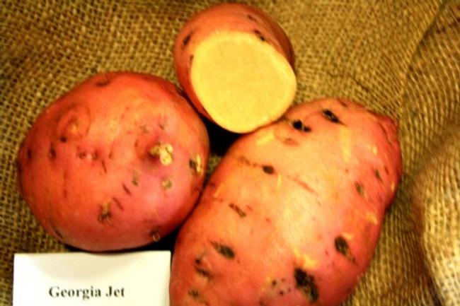 Georgia Jet Sweet Potato -  April to June Shipping