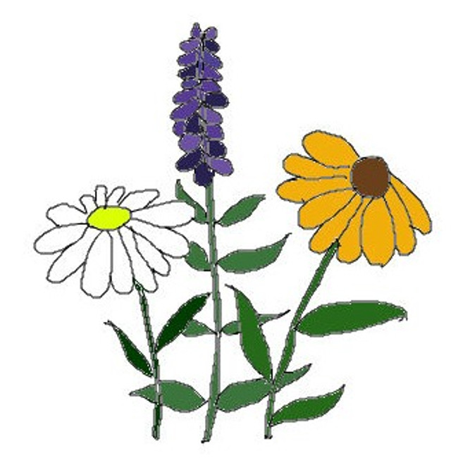Wildflowers, All Perennials - Bulk