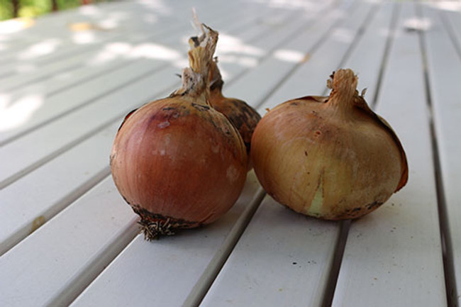 Australian Brown Onion - Organic