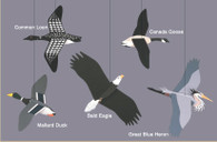Skyflight Wilderness Birds Mobile