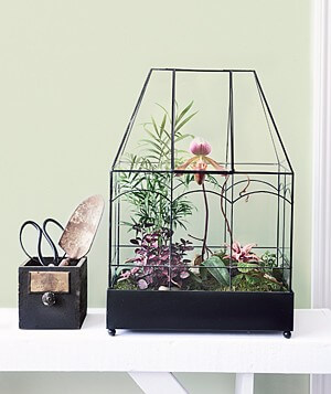 H Potter Glass terrarium