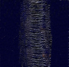 Genuine Eel Skin Panel - Electric Blue