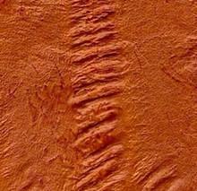 Genuine Eel Skin Panel - Mandarin