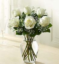 6 Stems White Love's Embrace Roses