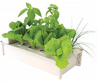Salad Box Hydroponic Salad Garden Kit