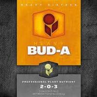 Heavy 16 Bud A 2.5gal