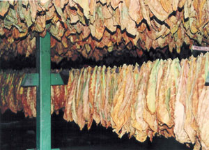 tobacco-dryinghouse1.jpg