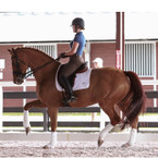 Ogilvy Custom Dressage Profile Pad