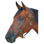 "Deluxe 3/4"" Leather Track Halter"