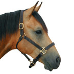 "Deluxe 1"" Leather Track Halter BEST SELLER!"