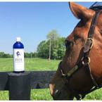 Whole Horse Equine Shampoo  - 32oz