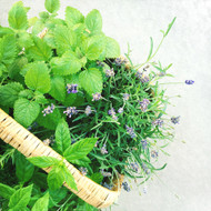Wondrous Bath Bars - Lavender & Peppermint
