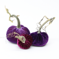 NEW - Velvet Pumpkin Trio - Purple