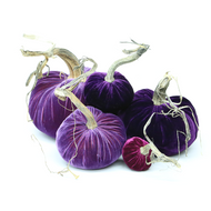 Velvet Pumpkin Large Set - Purple