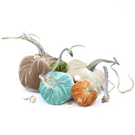 "The NEW Cozy Trio of 5 velvet pumpkins includes a 8"" Mocha, 6"" Bone, 5"" Lagoon, 4"" Spice, and 3"" Cactus with a small nest of complementing 6 velvet plush acorns in Ivory and Bone"