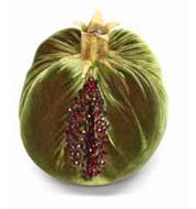Velvet Pomegranate - Cactus