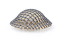 BrickArms Brodie Helmet w/ Fabric Mesh
