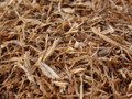 White Oak Bark ~ Herbal Alchemy