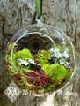 Faerie Orb with Forest, Spanish and Reindeer Moss . Faerie Gardens . Magical Garden Decor