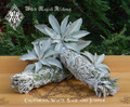 White Sage and Juniper Smudge Wands . Wild Harvested from California Jumbo