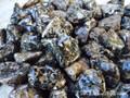 Turritella Agate Tumbled Gemstones Large