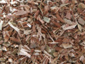 White Willow Bark ~ Herbal Alchemy