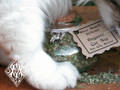 Organic Catnip for Love, Cat Magick and Silly Kitties . Featuring Gracie the Familiar