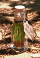 "Oak Apple Harvest . ""Alchemist Tree"" Ritual Oil . Mabon Rites, Autumn Equinox, Harvest Celebrations, Blessings of Bounty"