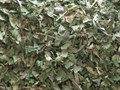 Lemon Verbena ~ Herbal Alchemy