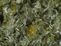 Arinca Flower ~ Herbal Alchemy