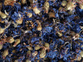 Blue Cornflower Petals  ~ Herbal Alchemy
