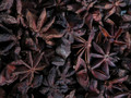 Anise Stars  ~ Herbal Alchemy