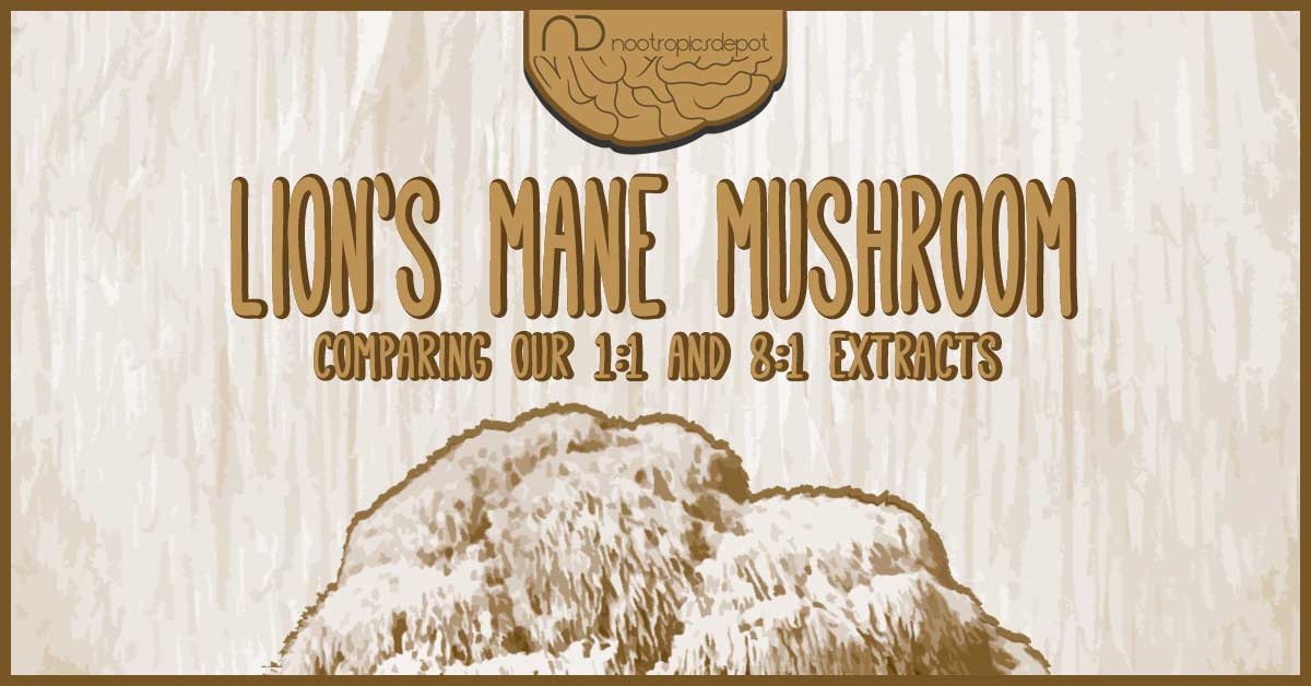 Hericium erinaceus: Which is the Best Lion's Mane Mushroom for You?