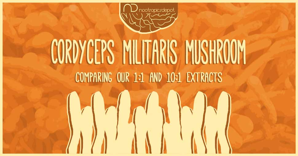 Which is the Best Cordyceps Mushroom for You