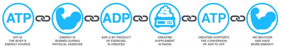 How Does Creatine Work