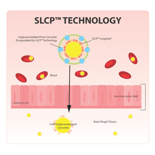 Longvida Curcumin and SLCP Technology